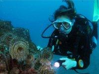 investigando el arrecife