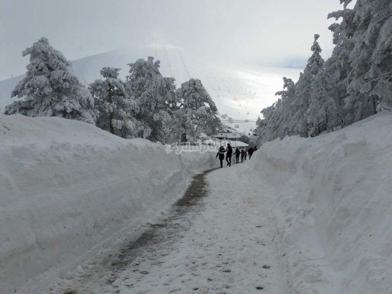 Camino de nieve
