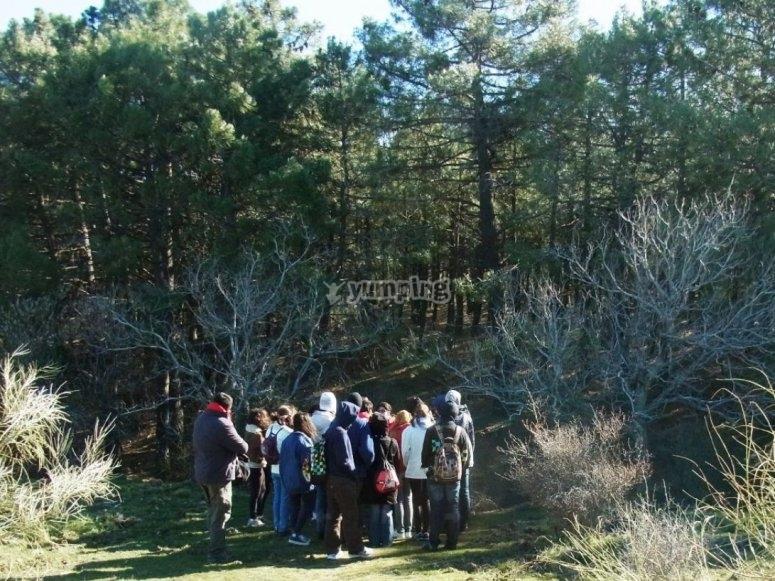Explicaciones a la entrada del bosque