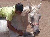 chico abrazando a un caballo blanco