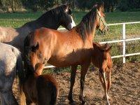 拉鲁比纳(La Rubina)自然遗址中的马匹