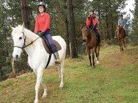 De ruta a caballo por el bosque