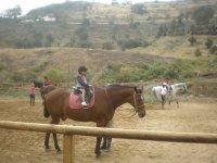 金丝雀孩子骑-999的 - 白马和棕色马