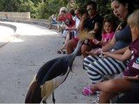 Amazed while feeding the bird