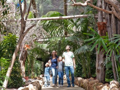 Ticket to Jungle Park for children in Tenerife