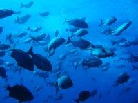 Buceando entre el banco de peces