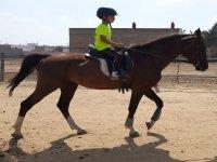 Niño montando a caballo en la hípica