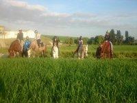 加的斯乡村引导的马游览