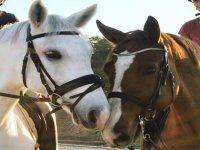 为游览做准备的马