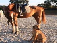 Acompañante inesperado en la ruta a caballo
