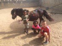 小马玩耍的孩子