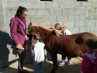 修饰老师旁边的小马