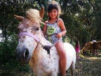 小马匹漂亮的马