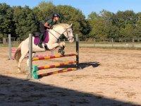 Practicando el sato del obstáculos con el caballo