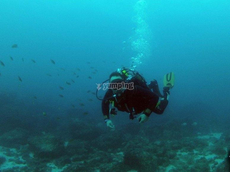 潜水员在马斯帕洛马斯