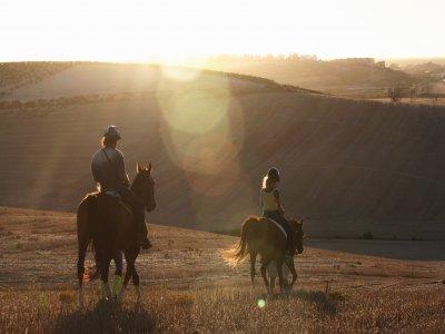 Al Mesquid Stable Rutas a caballo