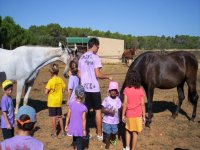 children feeding the horses