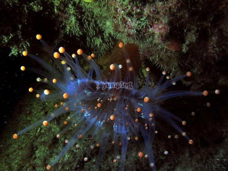 Fauna marina nocturna