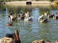 Diferentes pájaros en el estanque
