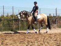 Riding lessons in equestrian center of Cullera