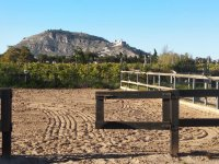 The outer track on which to exercise with the horse