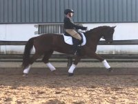 Classes of dressage in the center of Cullera