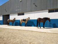 Our resting horses