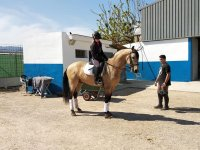 Properly equipped rider and horse