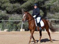Clase de equitación para todas las edades Benidorm