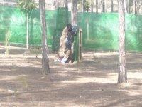 dos chicos detras de un arbol jugando al paintball