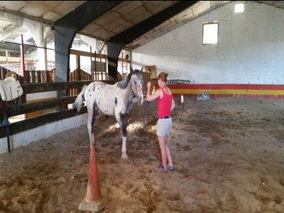 Hípica La Cerquilla Clases de Equitación