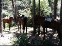 Nuestros caballos descansando entre la arboleda