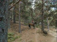 Salida a la sierra con el caballo