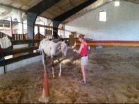 Practicando ejercicios junto al caballo