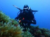 马洛卡潜水潜水员潜水员