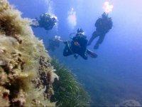 Buceadores aproximandose al fondo marino