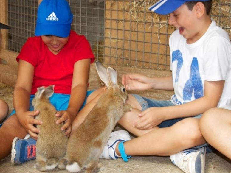 Con los conejos