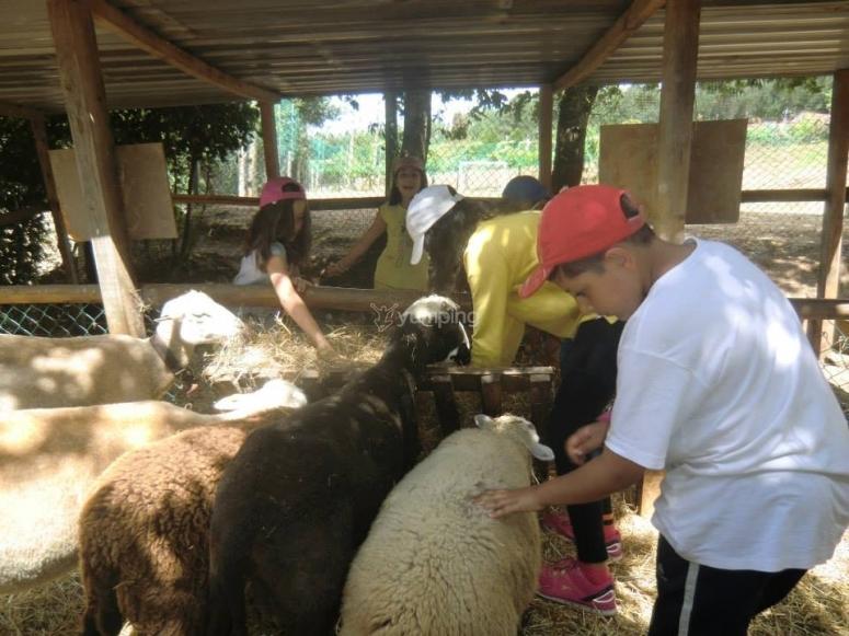 Cuidando de las ovejas