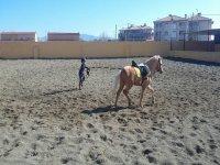 小训练他的马