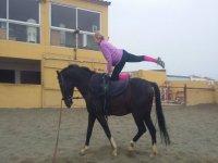 在马匹上进行不同的锻炼