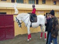 在马匹上的小骑士