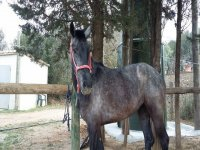在马stable中的一些马匹