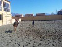 在赛马上训练的小马匹