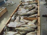 著名三月梅纳虾条