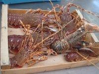 鲜鱼市场罗蒲甘