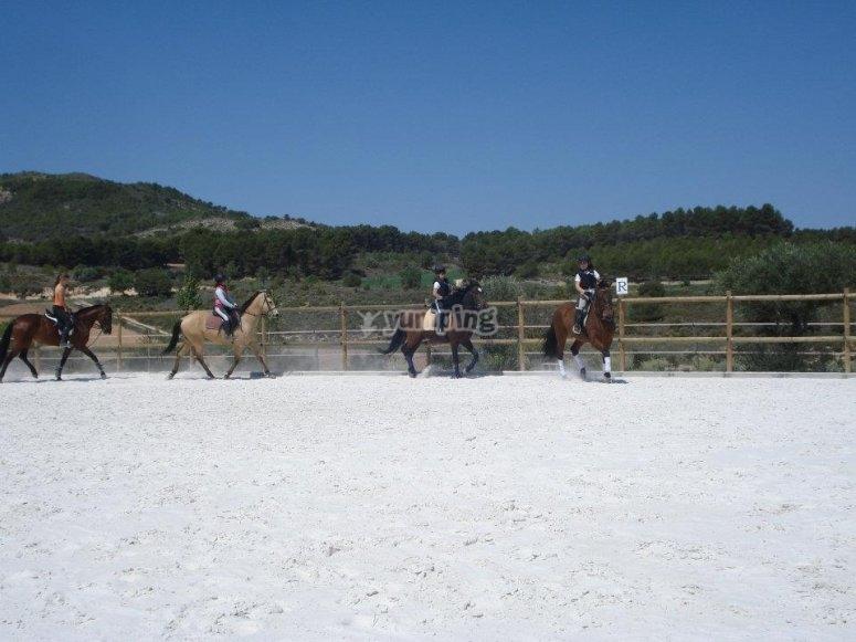 Equitacion en la pista