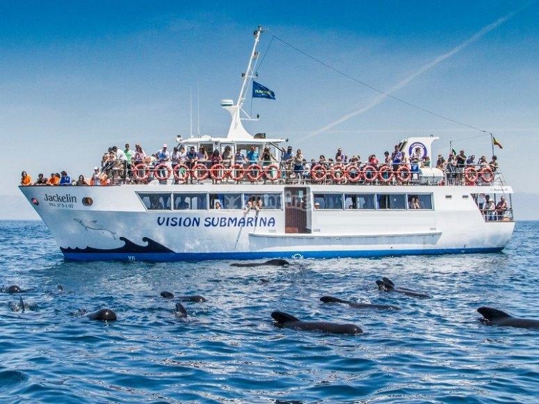Nuestro barco para ver cetaceos
