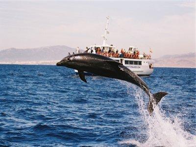 Ver delfines en Tarifa precio 1 a 3 años Temp Baja