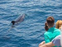 Ver cetáceos Gibraltar temporada alta Bebés