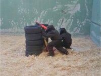 Paintball niños Navalcarnero, Tiro arco y Gymkana